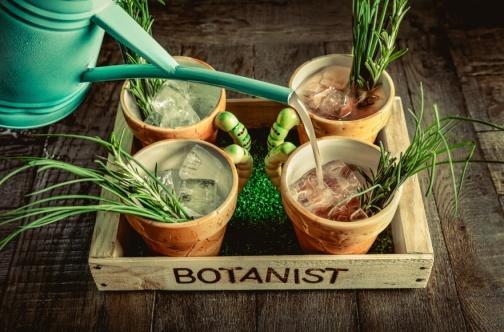 The Botanist York